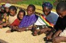 Ethiopian_Sidamo_5094421b9981a