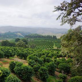 Organic Brazil Coffee